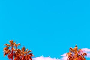 Minimal tropical art. Palm. Canary i