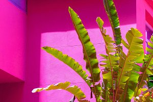 Palm on pink background wall. Plants