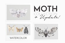MOTH watercolor butterfly collection