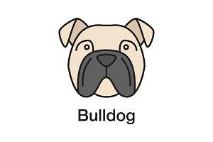 English Bulldog color icon