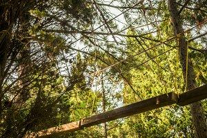 rope bridge between the trees in par