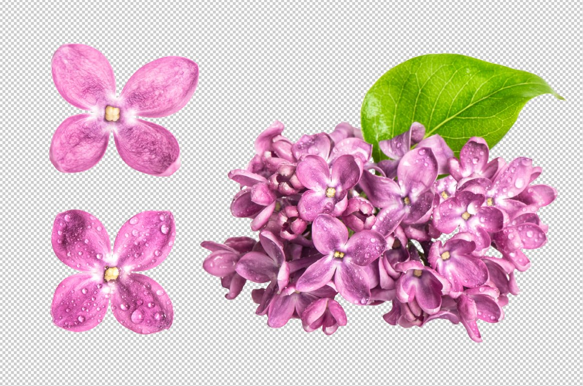 Png Spring Lilac Flowers Graphic Objects Creative Market