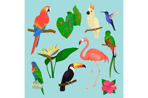 Tropical birds vector flamingo and