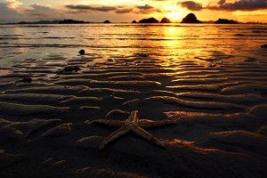 Starfish on the beach in sunset