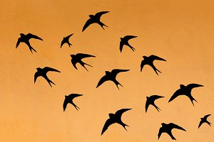 Silhouettes of many swallows