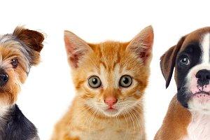 Three young pets