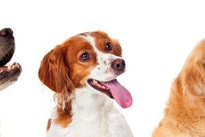 Beautiful portrait of three dogs loo