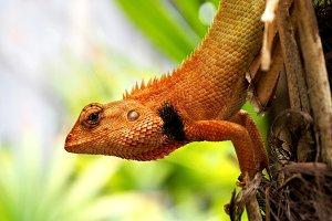 Chameleon on the tree