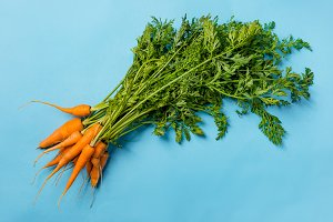 Fresh organic carrots with green lea