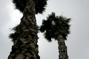 Palm trees at cloudy day