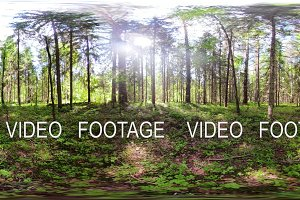 Beautiful green forest VR360