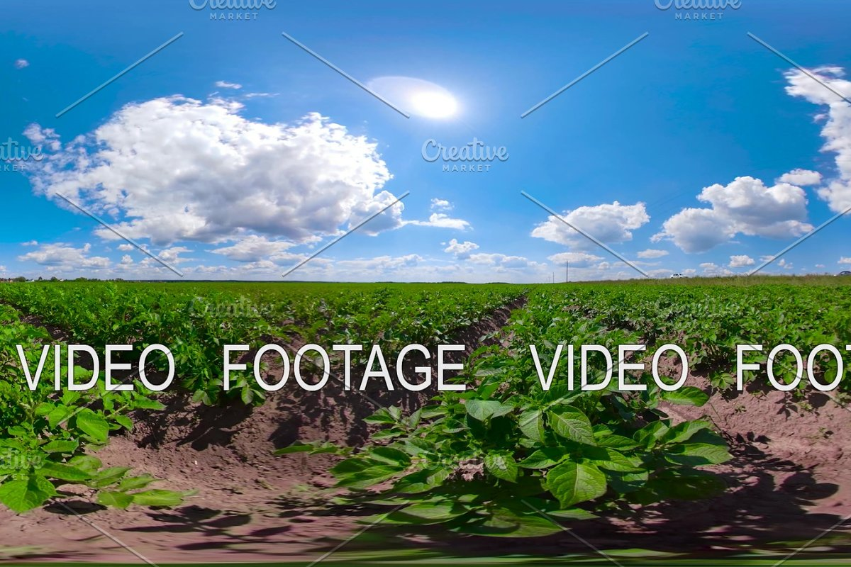Potato field under blue sky 360VR in Graphics - product preview 8