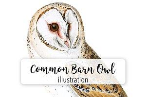 Birds: Vintage Common Barn Owl