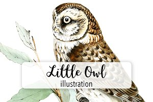 Birds: Vintage Little Owl