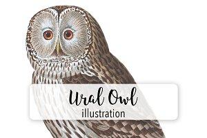 Birds: Vintage Ural Owl