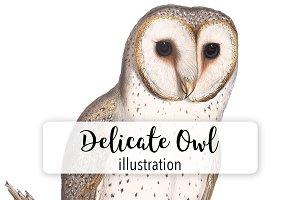 Birds: Vintage Delicate Owl