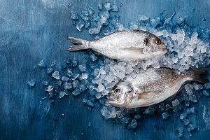 Raw fresh fish Dorado on ice