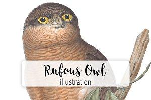 Birds: Vintage Rufous Owl