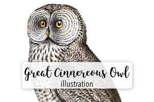 Birds: Vintage Great Cinnereous Owl