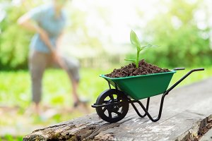 Wheelbarrow with growing seedling.