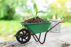 Small wheelbarrow with seedling.