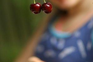 sweet cherry merry in human hand
