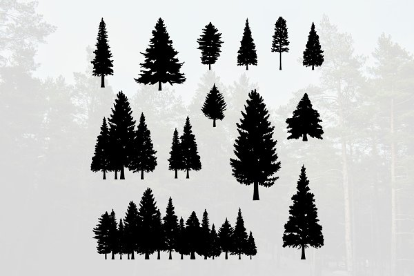 Coniferous Pine Fir Tree Silhouette