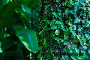 Tropics, exotic plants.