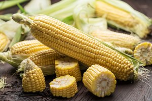 Ear of maize or corn on the dark woo