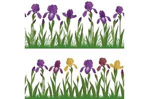 Flowers iris and grass, set seamless