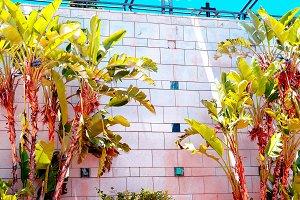 Fashion plant concept. Palm on white