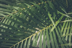 Creative tropical green leaves