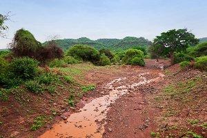 Savanna landscape, Tsavo West, Kenya