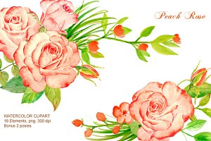 Peach Roses Watercolor Clipart