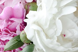 Pink and white peonies