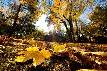 Colorful autumnal park