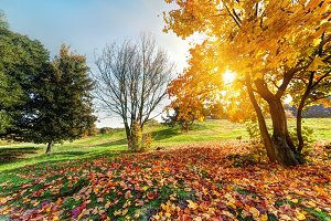 Colorful autumnal park