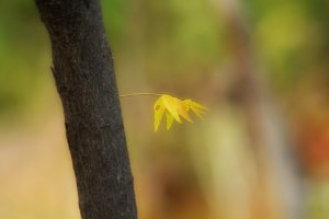 Yellow Lonely Leave