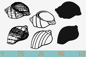 seashells svg, conch shell, set