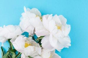 Blooming white peony flowers