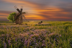 Landscape with windmill on floral me