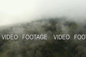 Rainforest in the fog. Jawa island