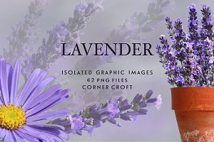 Lavender clipart, Isolated Lavender
