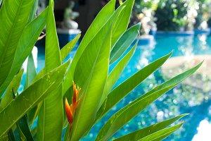 Tropics, exotic plants and pool