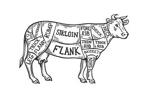 Meat diagram cow engraving vector
