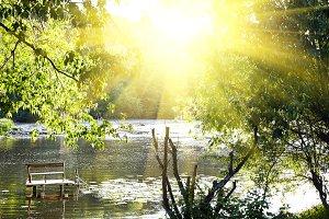 Sun rays and green tree