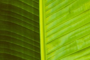 Tropical Leaf Background. Close up