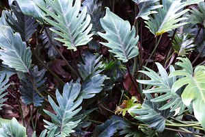 Green tropical background.  Tropical