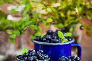 Fresh ripe bluberries (bilberries) i