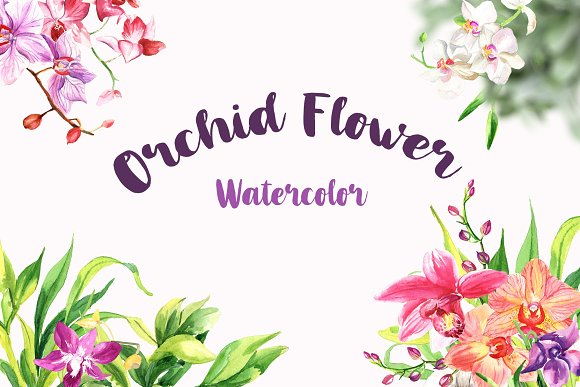Watercolor Flowers - Orchid